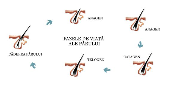 Alăptarea la sân şi pierderea părului